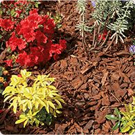 book a gardener to come to your home and pull weeds, plant new plants or mulch your flower beds