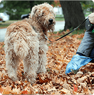 book a dog cleanup service to scoop all the poop in your yard